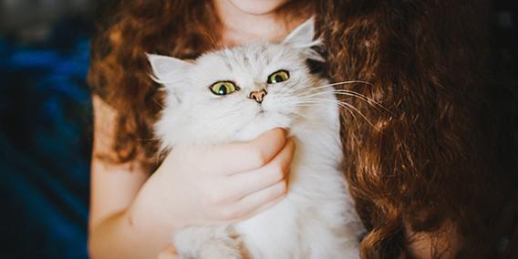 NOVEDADES LEGISLATIVAS. Venta a distancia de medicamentos veterinarios no sujetos a prescripción obligatoria  | Sala de prensa Grupo Asesor ADADE y E-Consulting Global Group